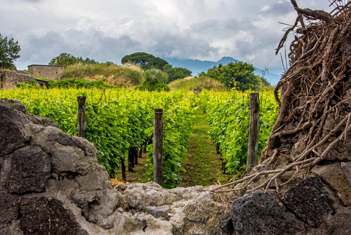 A hole in a stone wall reveals a vineyard planted many years ago