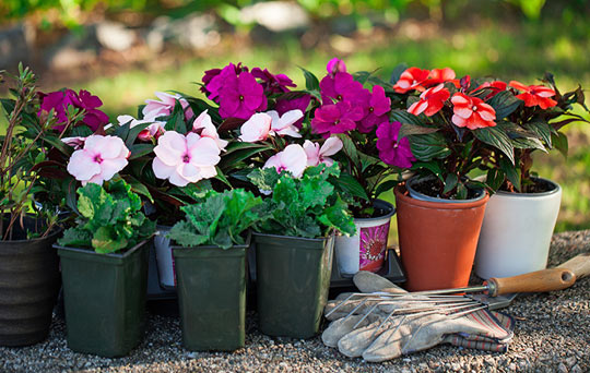 Tips for planting spring flower gardens remember to try to choose different types of flowers that will bloom at different times this will deliver you beauty and mightylinksfo